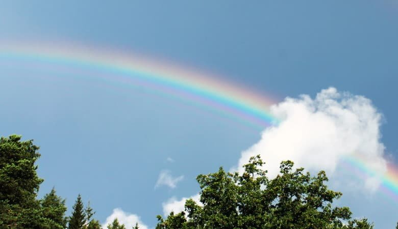 A view of a rainbow over trees