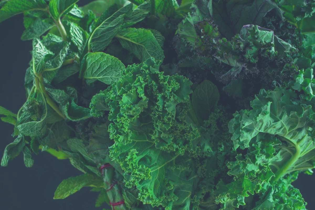 A close up shot of a pile of leafy greens