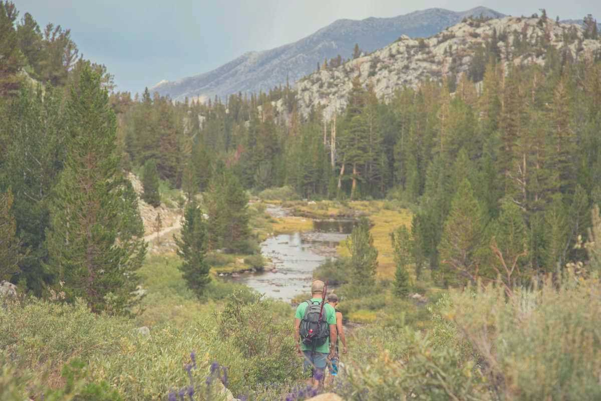 Two people hiking through a forest panorama